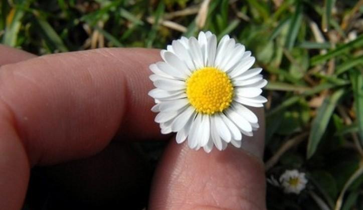 proljece-cv