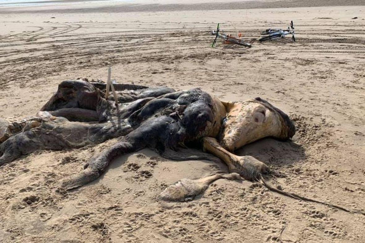 More izbacilo misteriozno biće na plaži u Liverpoolu: U toku istraga o čemu je riječ
