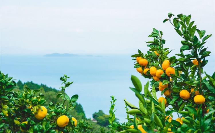 Mandarine su hranljive i pune vitamina